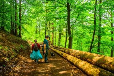 Sie sonnen auf dem Waldweg