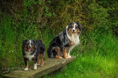 Foxy und Shaggy auf einer Bank - Rund um den Hochsimmer