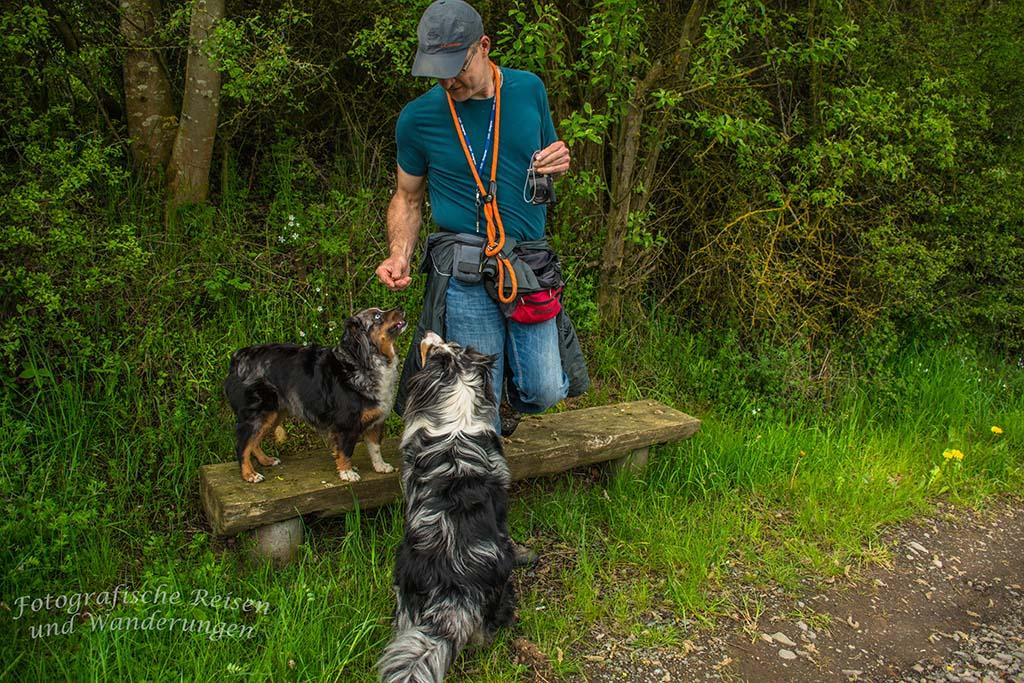 Volker mit Foxy und Shaggy - Rund um den Hochsimmer