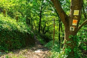 Kleines Waldstück - Traumpfädchen Löfer Rabenlay