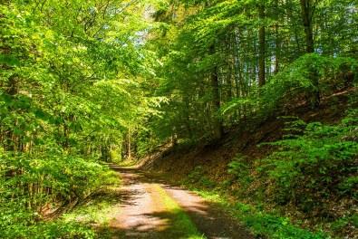 Lauschiger Waldweg