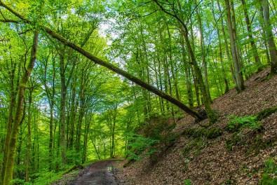 Gefährlicher Windbruch - Wäller Tour Buchfinkenland