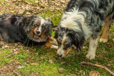 Foxy und Shaggy