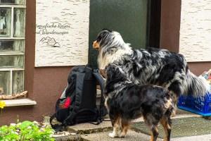 Zwei Hunde vor der Haustüre