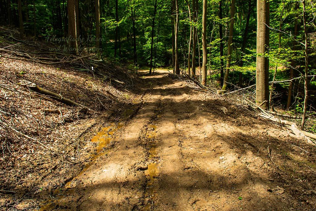 Waldweg sehr zerwühlt