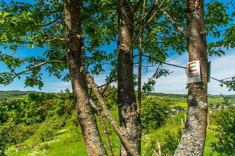Blick durch den Baum auf Kelberg