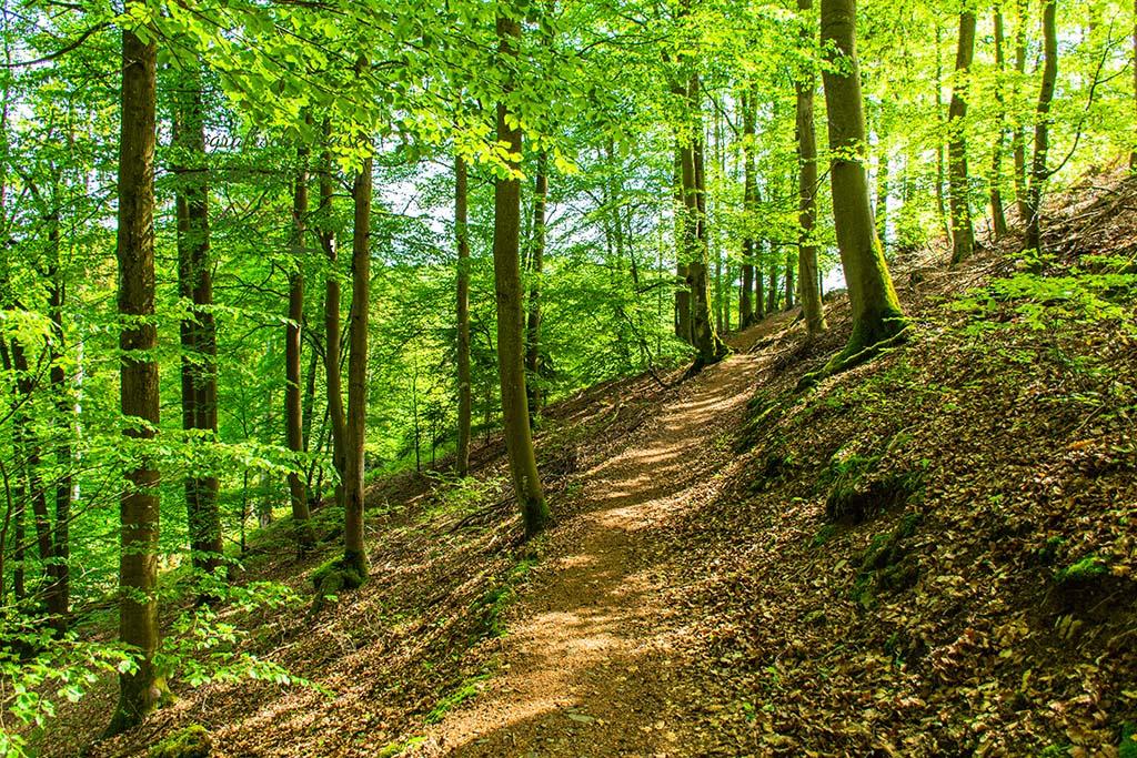 Helle Waldwege - Wacholderheide in der Eifel