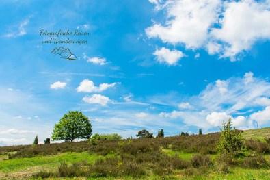 Heideflächen - Wacholderheide in der Eifel