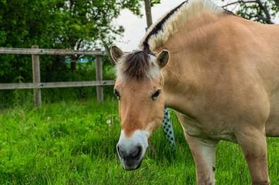 Pferd auf Wiese - Spayer BlickinsTal