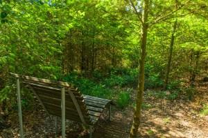 Waldbaden auf der Traumschleife Baybachklamm
