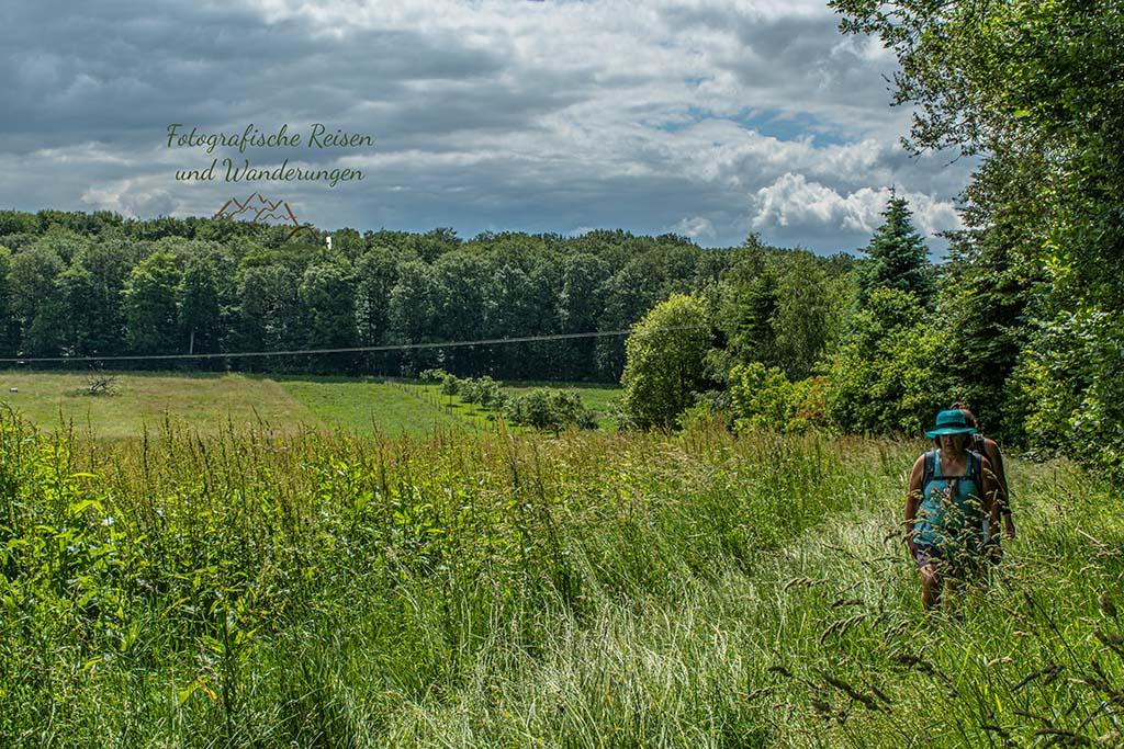 Hohe Gräser auf dem Wanderweg