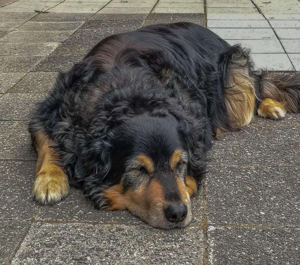 Alter Hund an der Heidsmühle