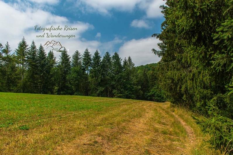 Feldweg - Eifelsteig Bruch - Himmerod