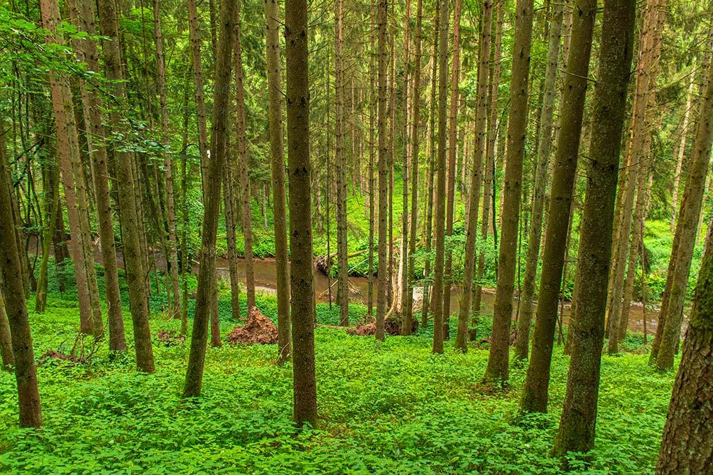 Blick zur Salm durch die Bäume