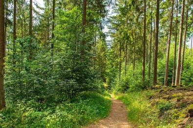 Gerrlicher Waldweg - Der Eifelsteig und die Maare