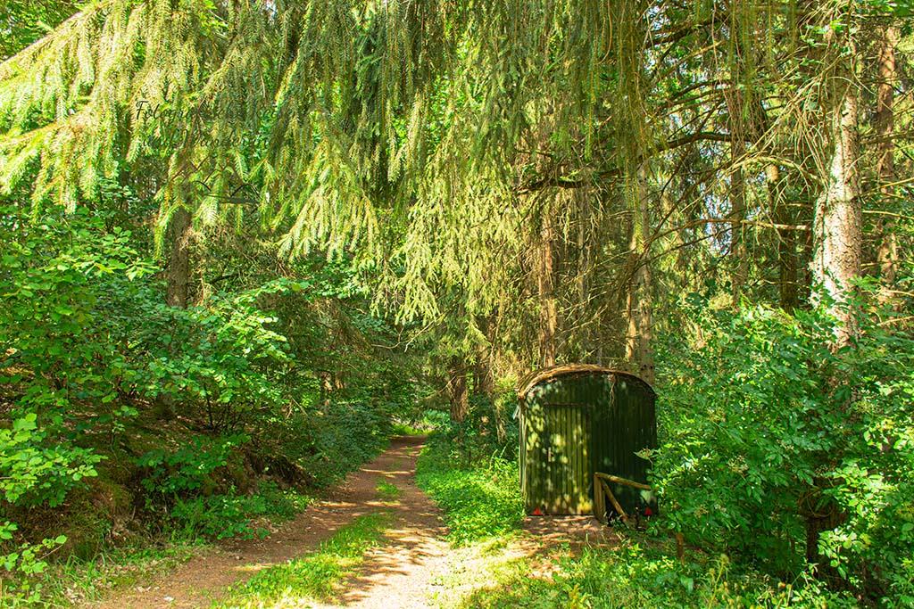 Hübscher Waldweg