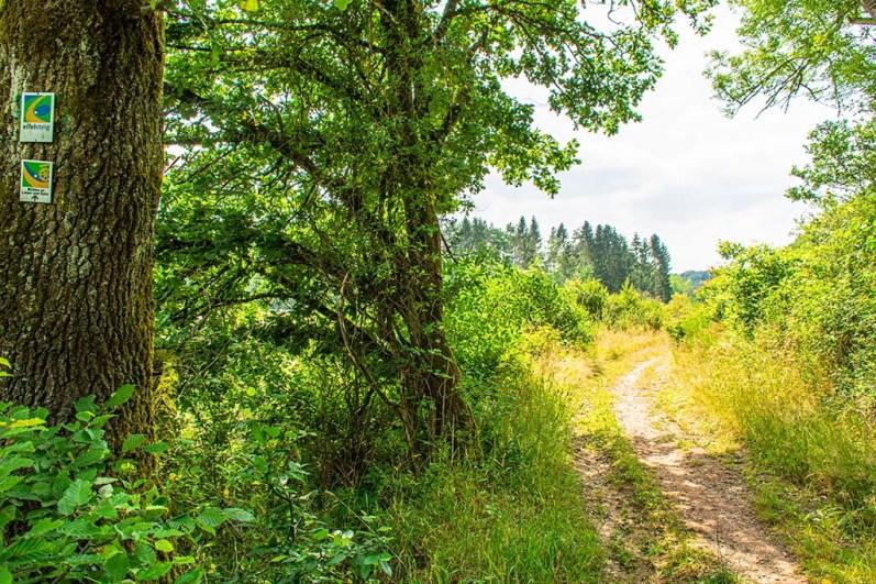 Eifelsteig zwischen Manderscheid und Himmerod