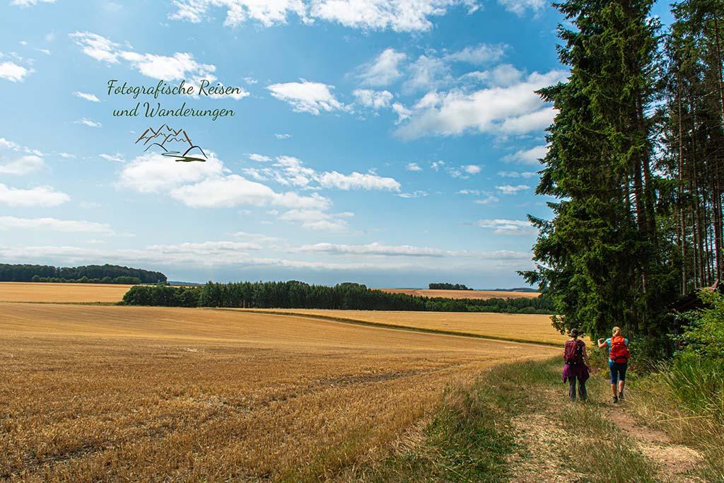 Getreidefelder zwischen Manderscheid und Himmerod