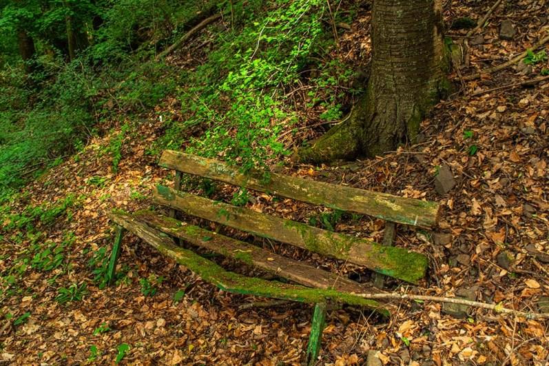 Verrrottete Bank im Wald