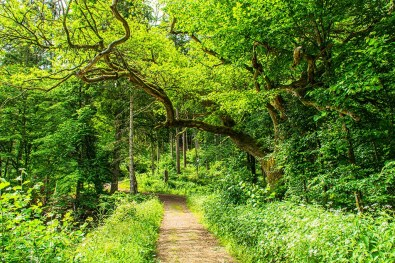 skurrilen Bäume - Die Küppeltour im Lahntal