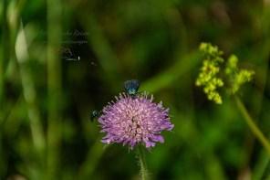 Insektenschau