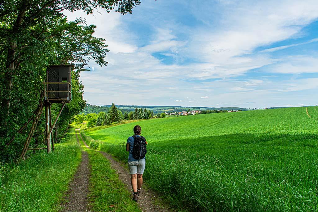 Zwischen Wasenbach und Steinsberg