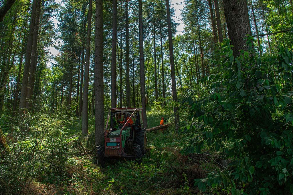 Trekker im Wald