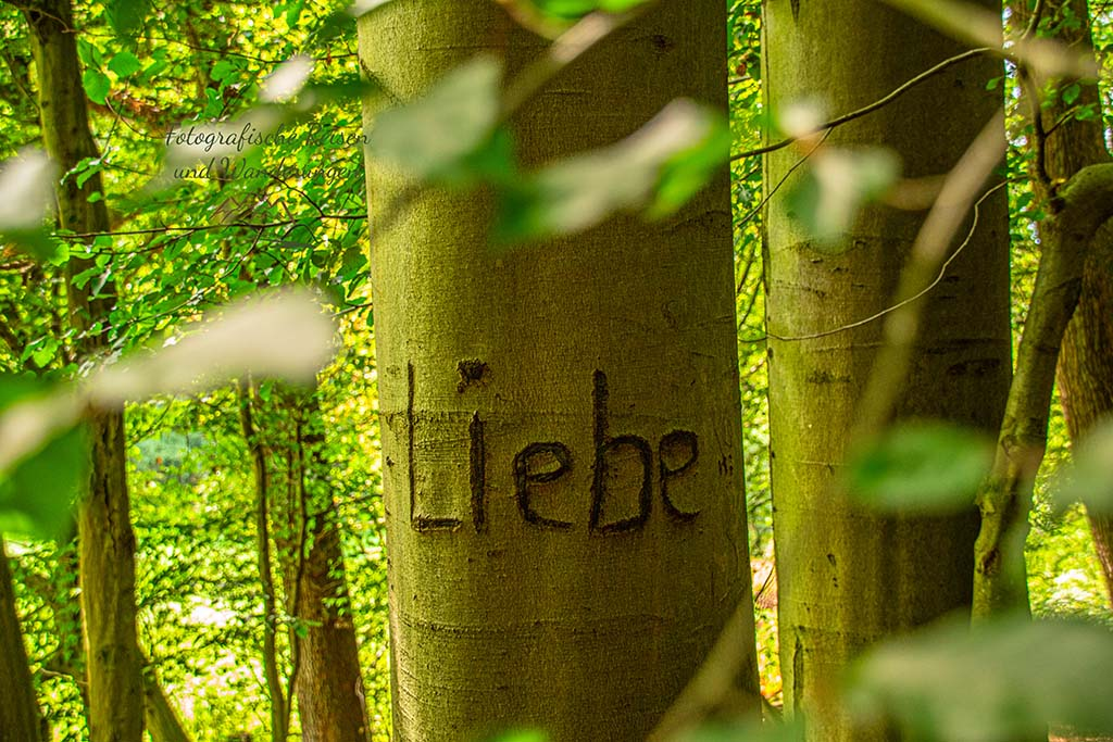 """Bauminschrift """"Liebe"""""""