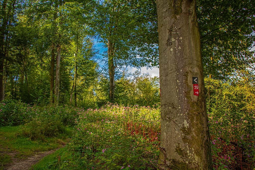 Wegezeichen Kräuterweg auf Baum