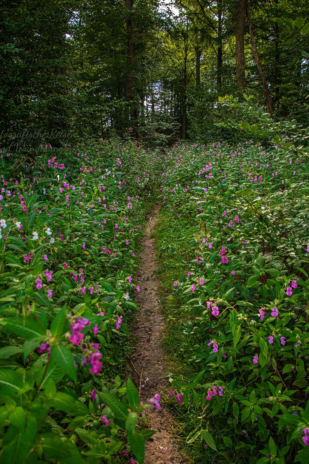 Allee aus Springkraut - Naafbachtal wandern