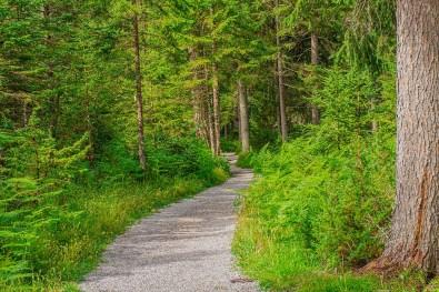 Sauber gefegter Waldweg