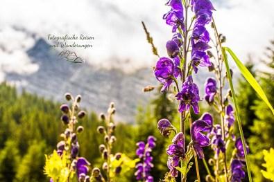 Blumenwiesen auf dem Weg zum Finale am Eibsee