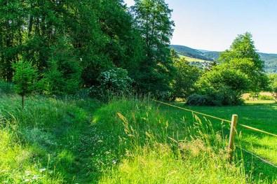 Wandern im Siegerland -Sanfte Wiesenwege gab es auch
