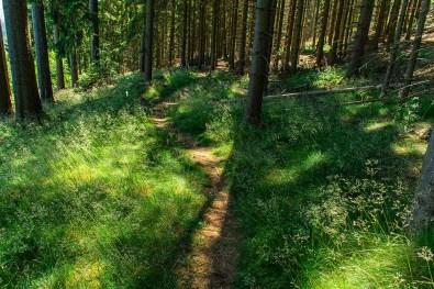 Zarte Gräser - Wandern im Siegerland