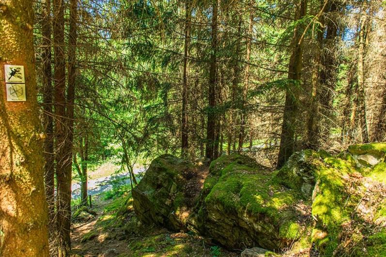 Bemooste Steine liegen im Wald
