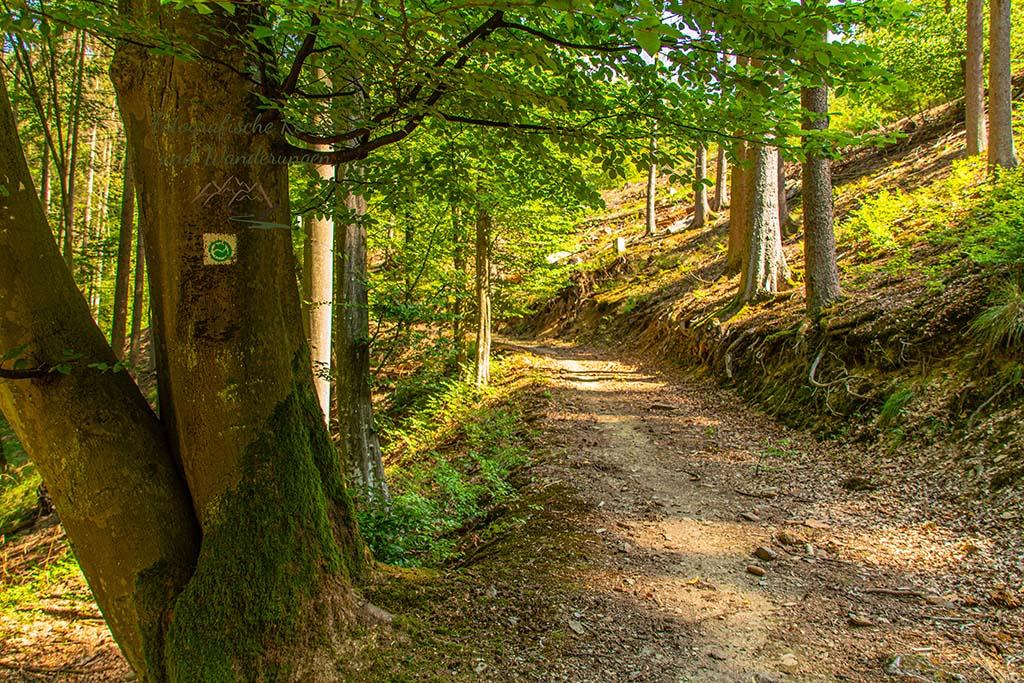 Dicker Baum mit Wanderwegezeichen