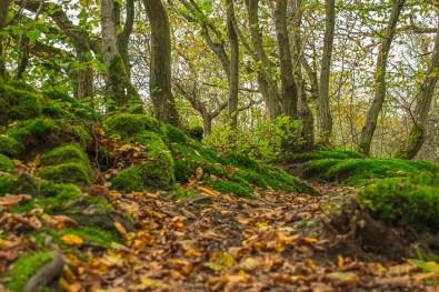 Moos bewachsene Steine und Bäume