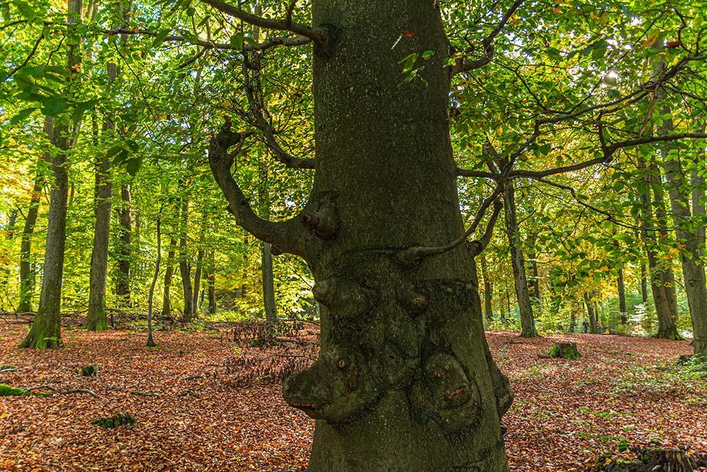 Gesichter im Baum