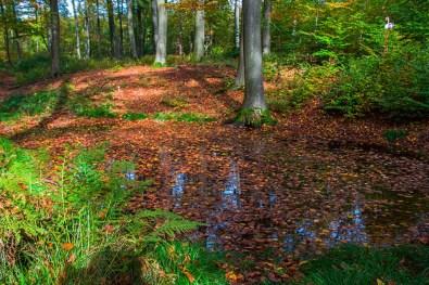 Qeullbereiche mitten im Wald