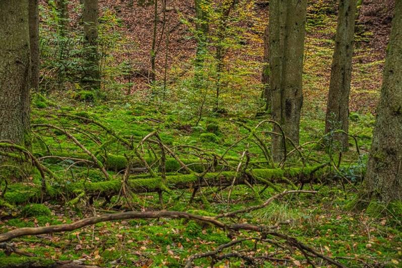 Urige Waldlandschaft