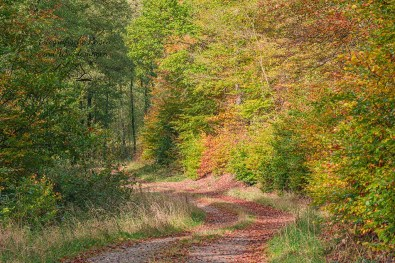 Bunte Herbsteindrücken