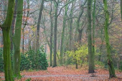 Diesiger Wald