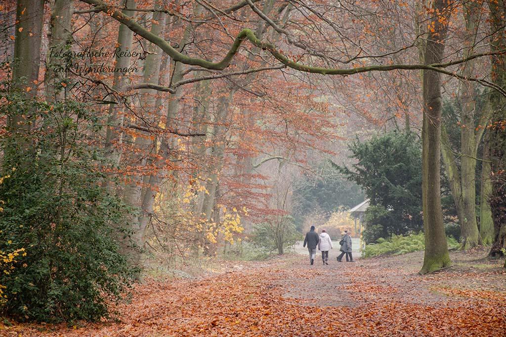 Wittringer Wald mit Rotbuchenbeständen