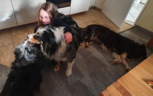 Drei Hunde ein Mädchen