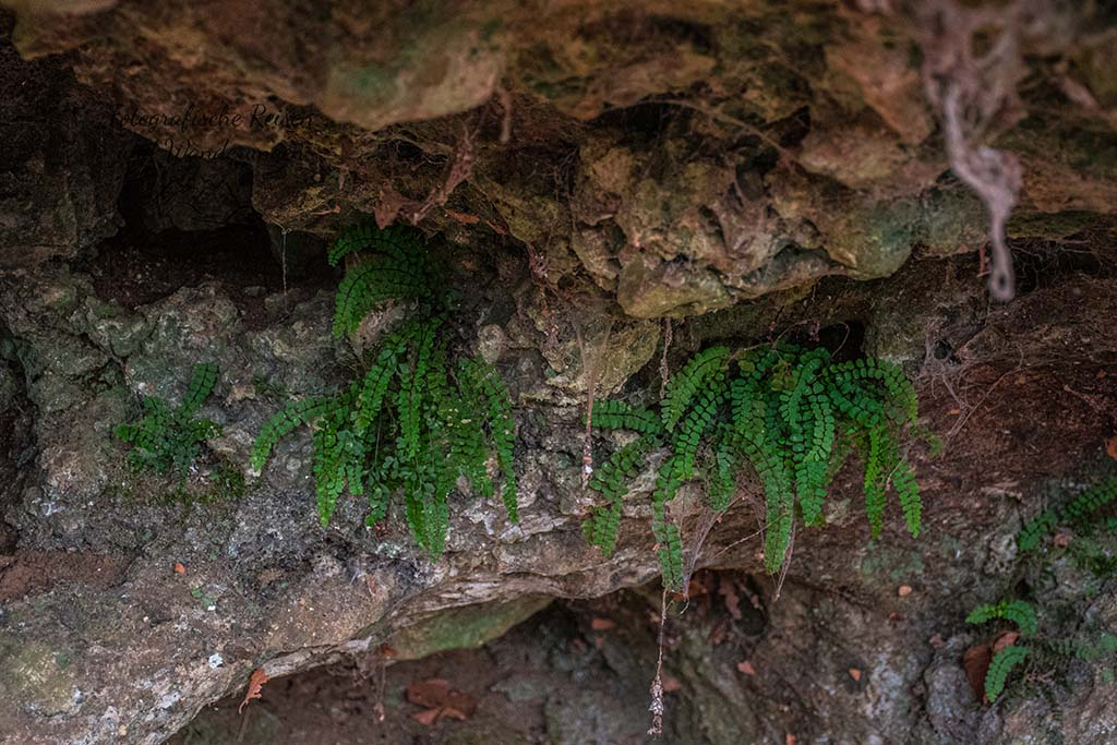 Kakushöhle und kleine Farngewächse