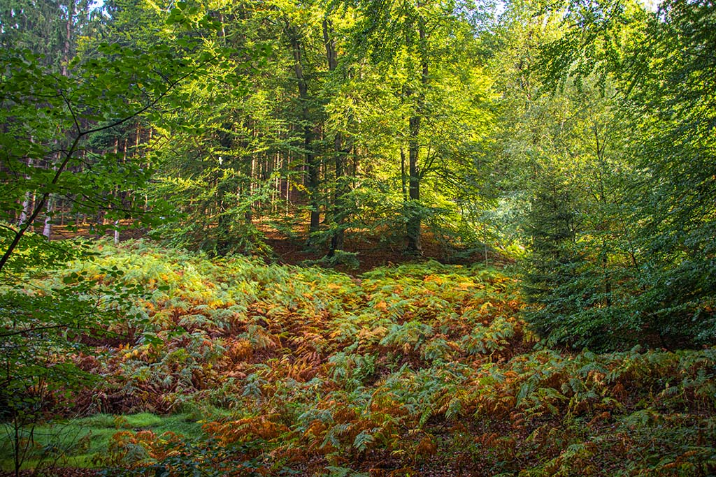 Teutoschleife Dörenther Klippen - Farn im Herbstkleid