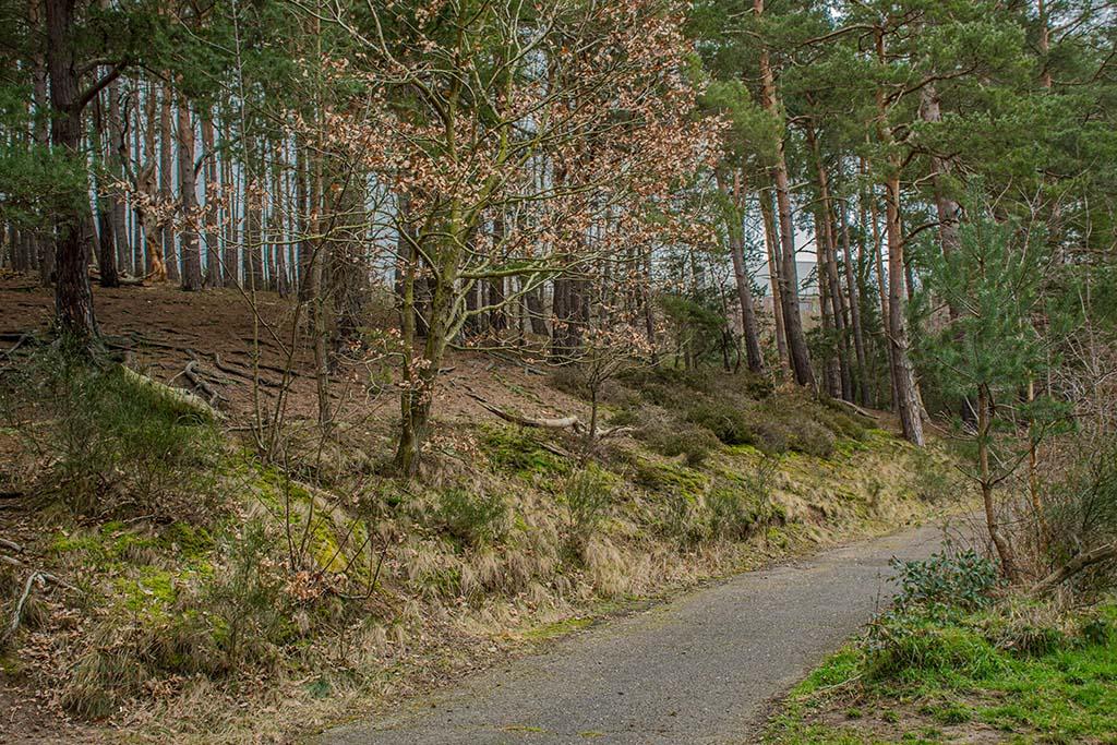 EifelSchleifen und Hochwildpark Rheinland