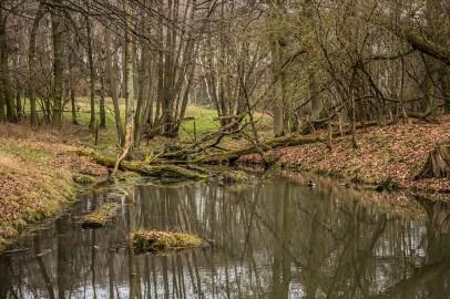 Gewässer am Elchgehege