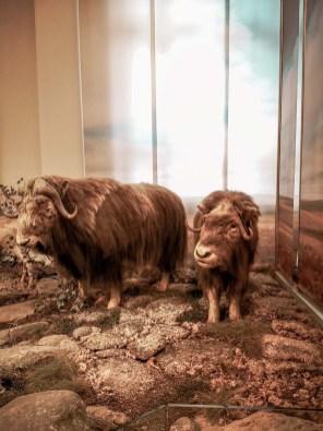 Das Zoologische Forschungsmuseum Alexander Koenig