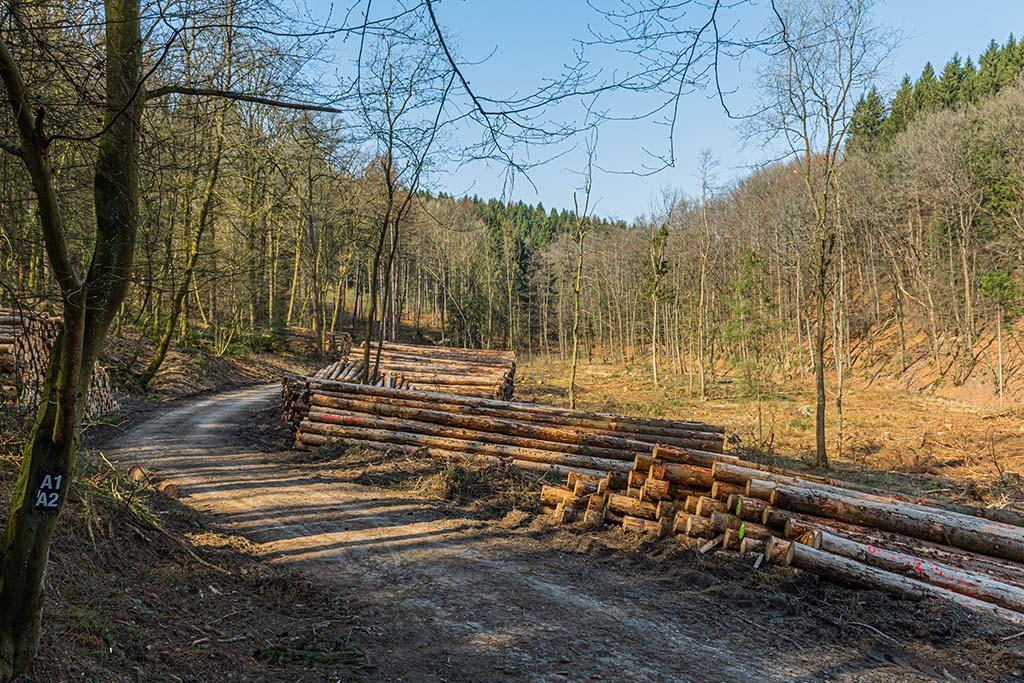 Einst ein Fichtenwald